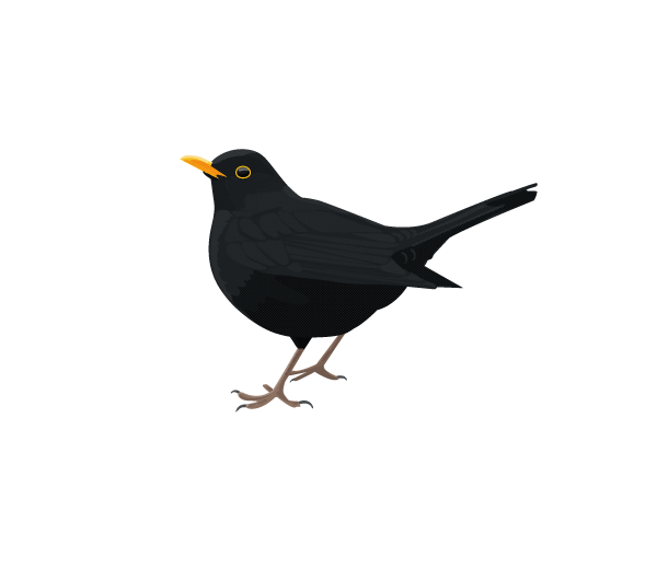 clipart free library Blackbird drawing the beatles. Pin by jenny ren