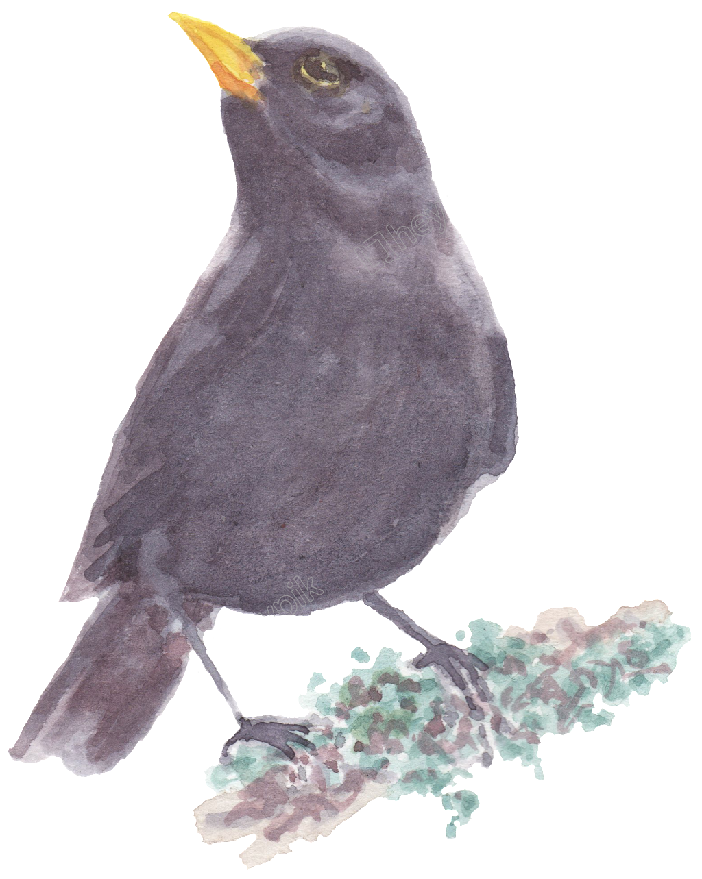 picture freeuse Black bird standing on. Blackbird drawing watercolor