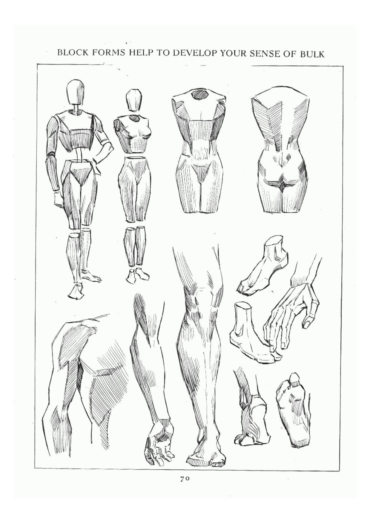 vector freeuse stock Block drawing human anatomy. Pin on