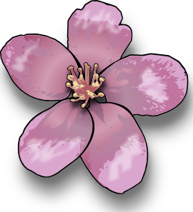 image transparent download . Blossom clipart