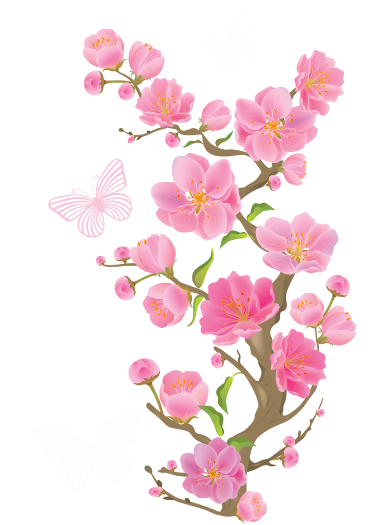 svg transparent library Spring cherry blossoms with. Blossom vector