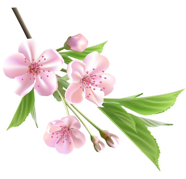 clipart free download Pin by judit f. Blossom clipart dogwood tree.