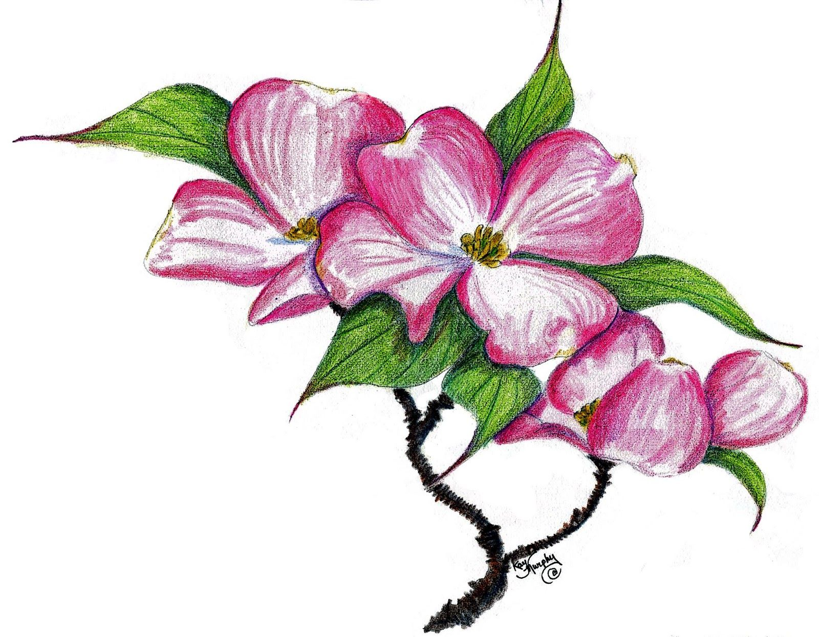 banner freeuse download Blossom clipart dogwood tree. Drawing free cliparts that.