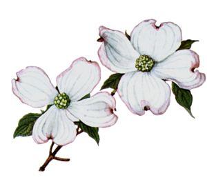 svg download Blossom clipart dogwood tree. Flower clip art free.