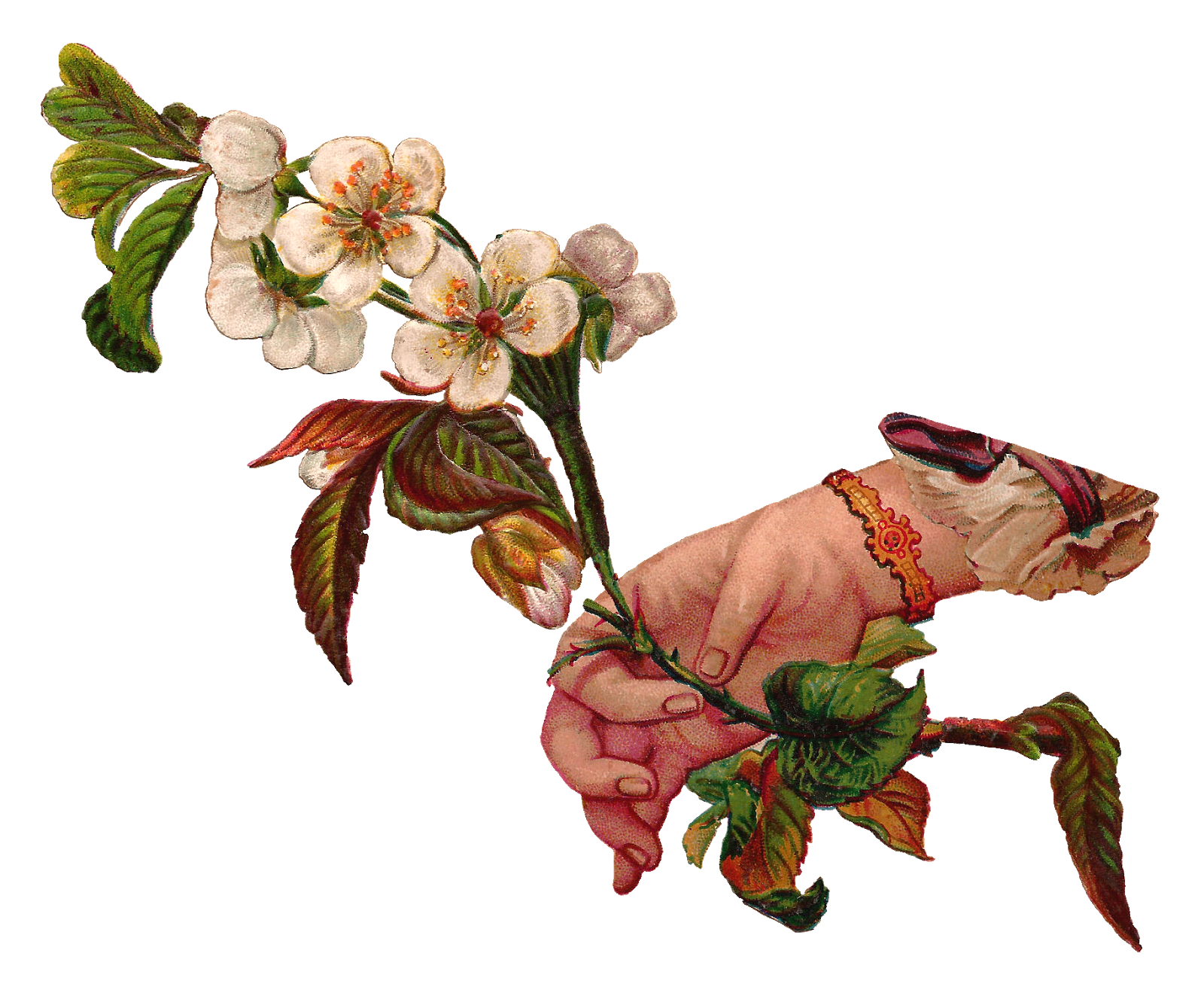 graphic library library Blossom clipart dogwood tree. Antique images digital illustration.
