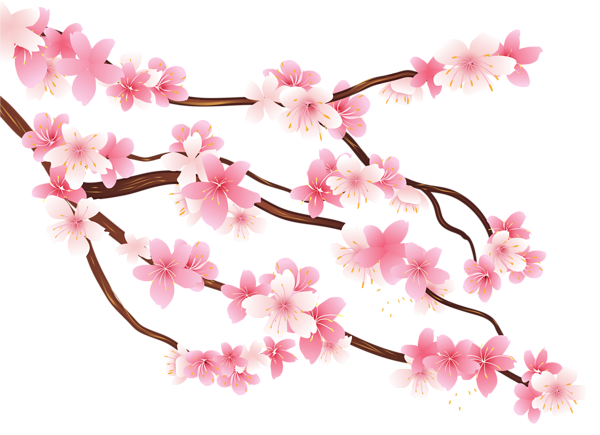 picture download Blossom clipart plum flower. Pink spring branch png.