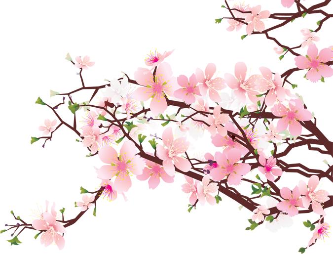 vector transparent download bonsai drawing cherry blossom #90433014