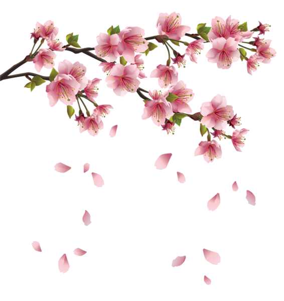 banner library download Beautiful Pink Spring Branch with Falling Petals PNG Clipart