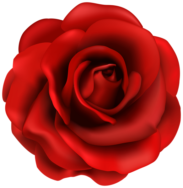 banner library stock Blossom clipart rose. Red flower png image.