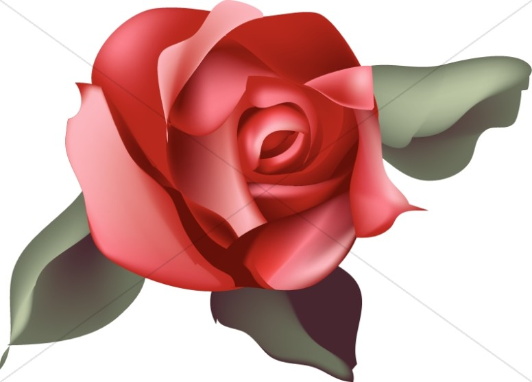 royalty free stock Blossom clipart rose. Single red church .