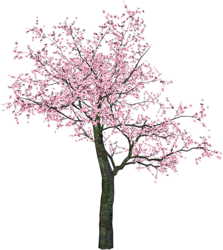 banner library download Pin by on pinterest. Blossom clipart tree