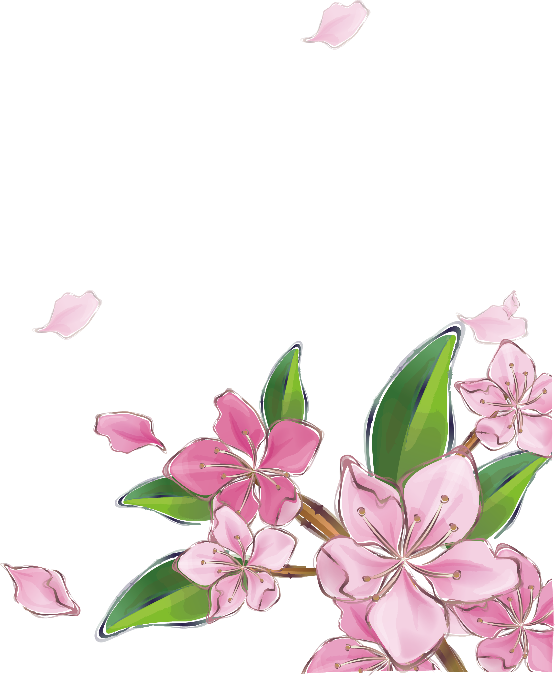 clipart black and white library Pink peach transprent png. Blossom vector