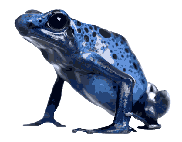 clip free stock Blue clipart poison dart frog. Clipground.