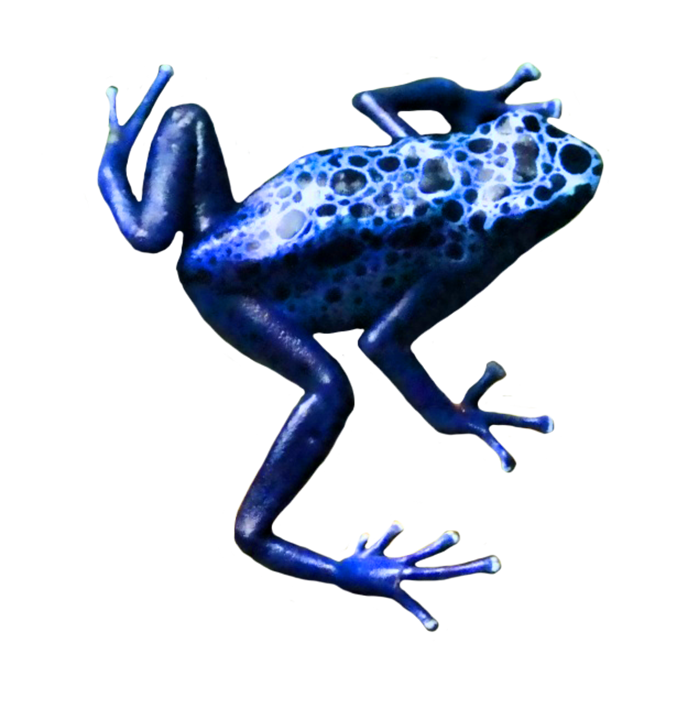 jpg black and white library Blue clipart poison dart frog. Clip art tree small.