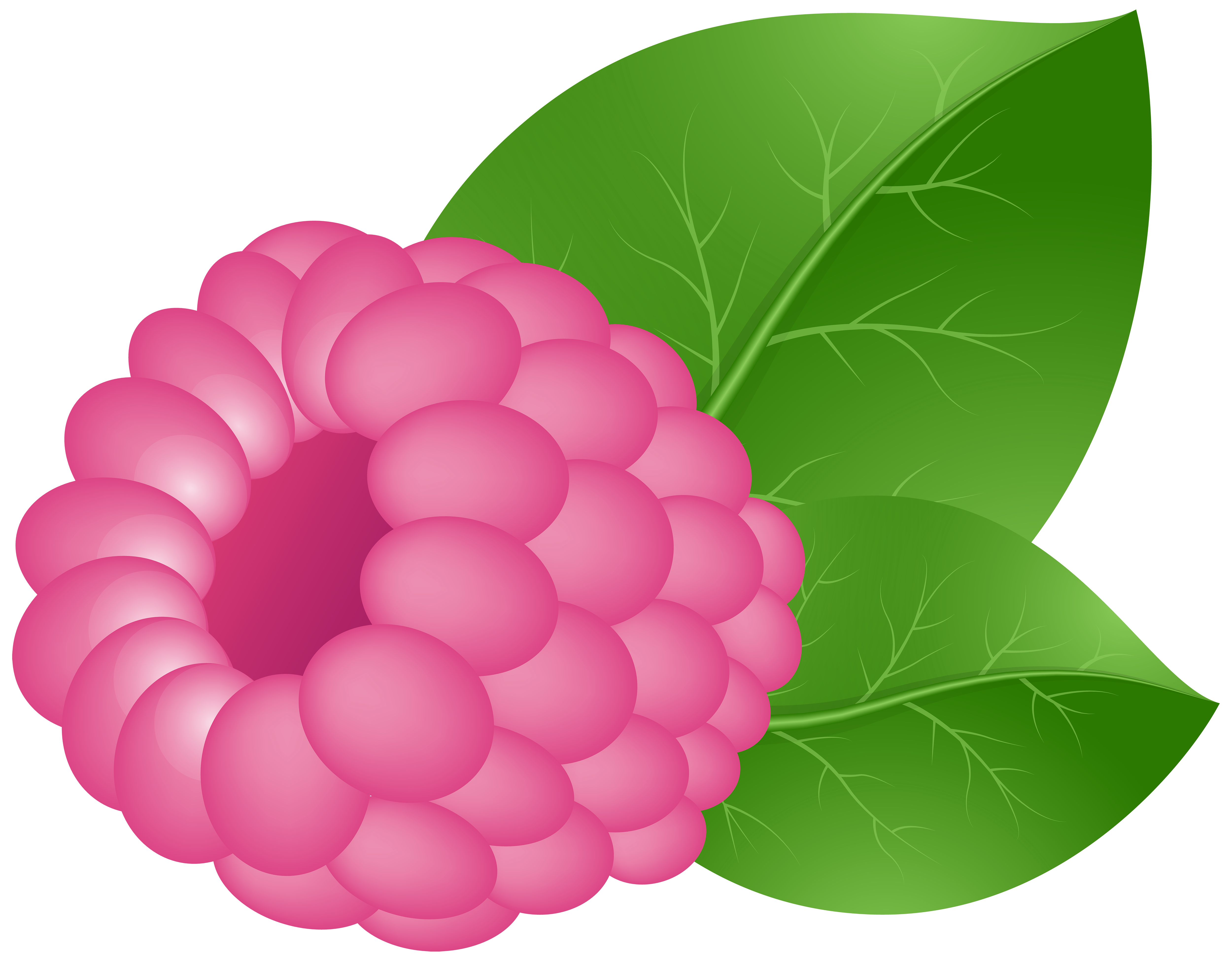 picture freeuse stock Raspberry Fruit Clip art