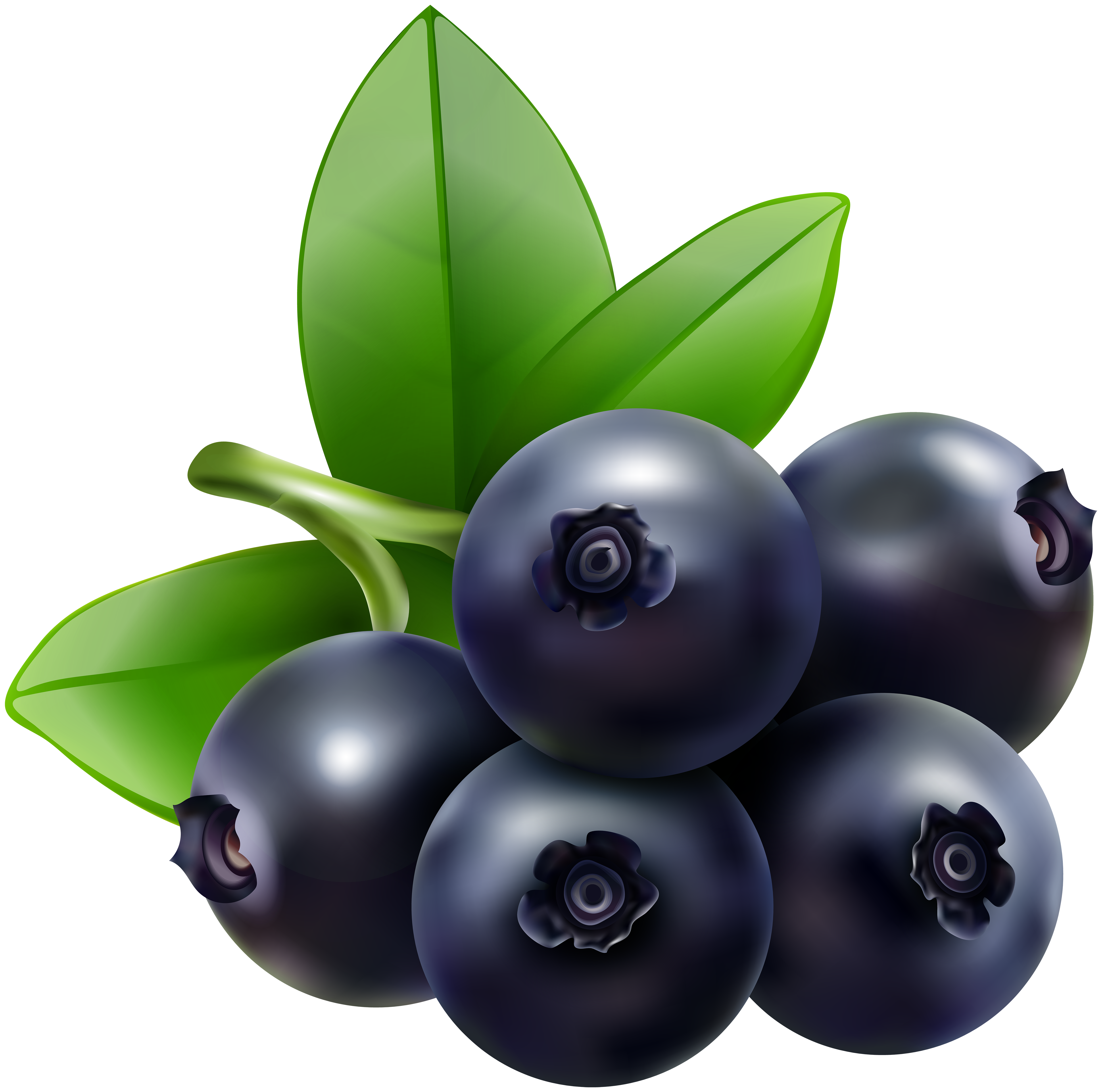 clipart freeuse library Blueberry vector. Bilberry huckleberry clip art