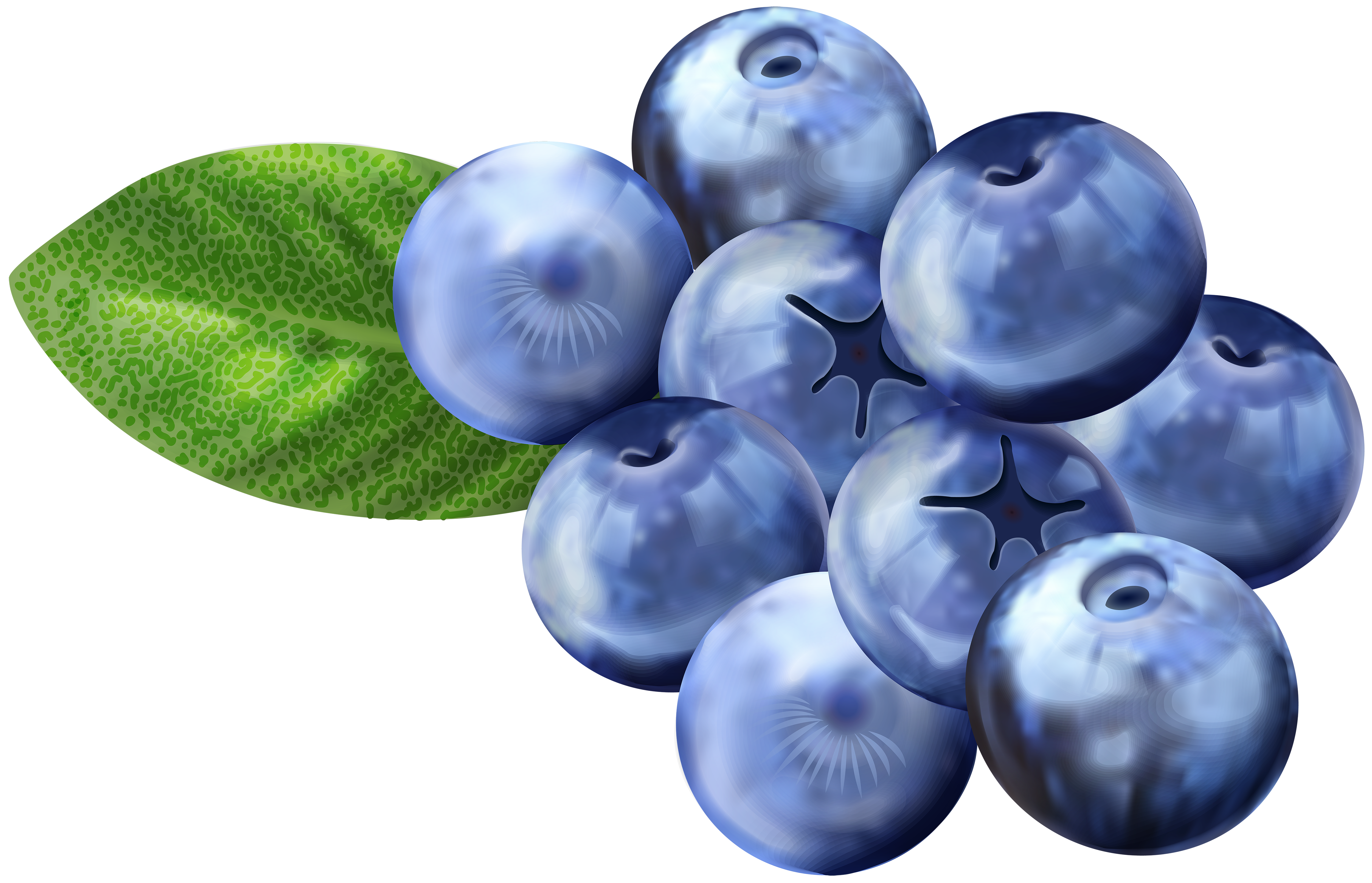 image black and white library Blueberries png clip art. Blueberry clipart
