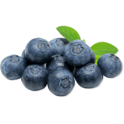 image library library Transparent fruit blueberry. Blueberries png images stickpng
