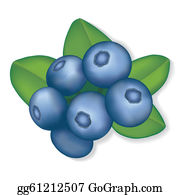 vector royalty free stock Clip art royalty free. Blueberry clipart