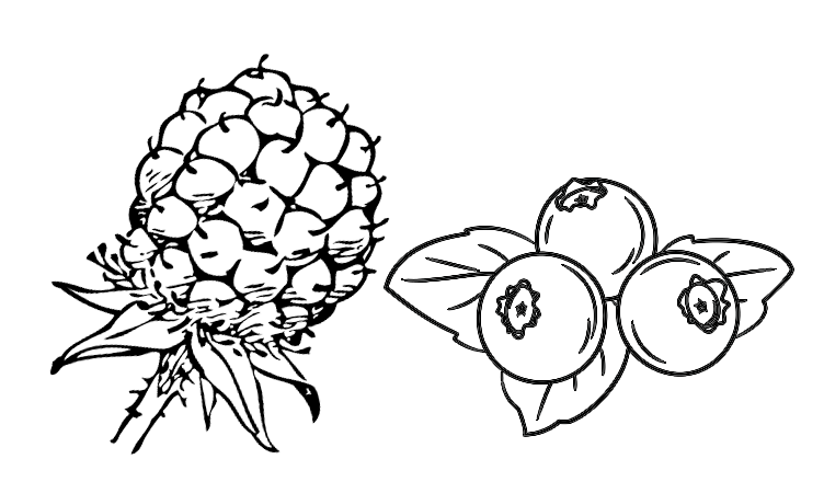 vector black and white library Blueberry clipart black and white. Drawing at getdrawings com