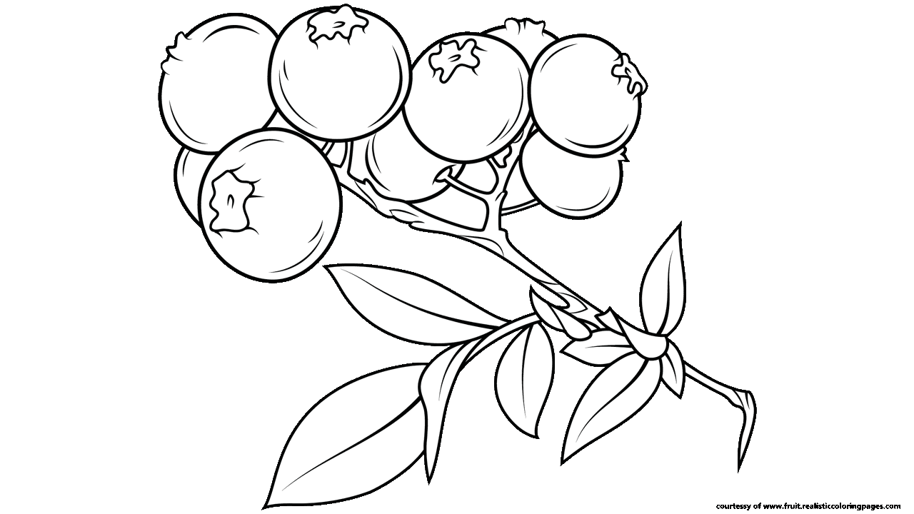 png free download  fascinating fruit names. Blueberry clipart black and white