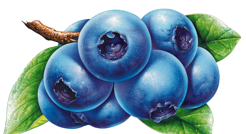 banner royalty free Blueberry Bilberry Drawing Clip art