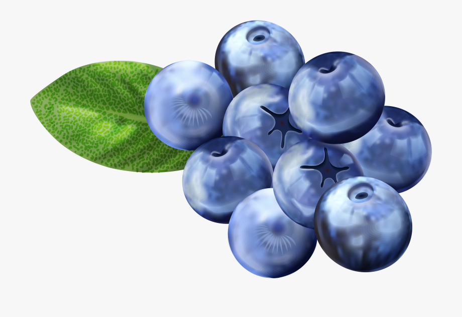 banner library stock Blueberry clipart. Png free clip art