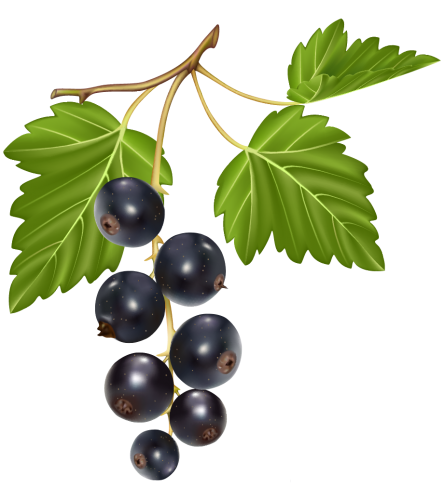 clip black and white download Blueberries png clipart frutas. Blueberry vector