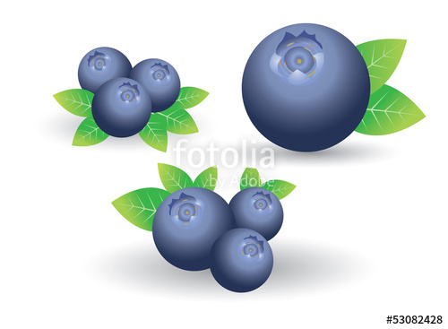 clip art library stock Stock image and royalty. Blueberry vector