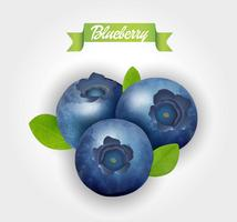 clip royalty free download Blueberry vector. Blueberries free art downloads