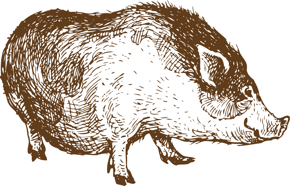 picture free stock Boar vector animal sketch. Sheep lamb and mutton