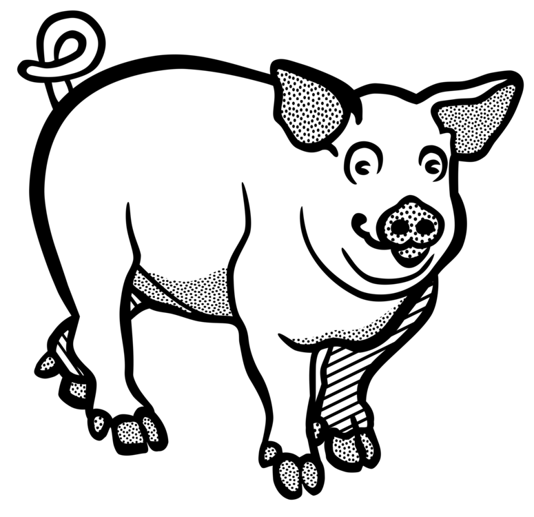 graphic Boar vector black and white. Wild line art drawing