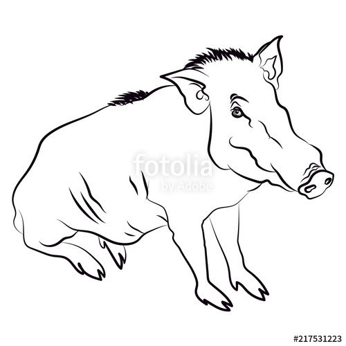 clip art freeuse stock Of wild isolated illustrartion. Boar vector silhouette