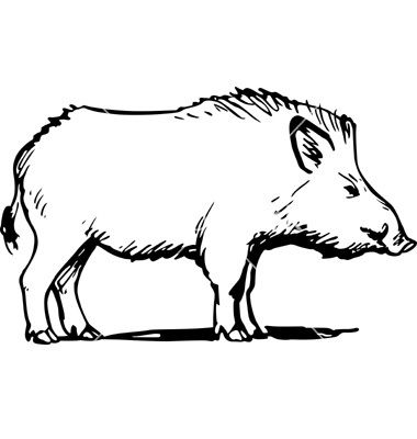 picture library Boar vector wild. In animal drawings