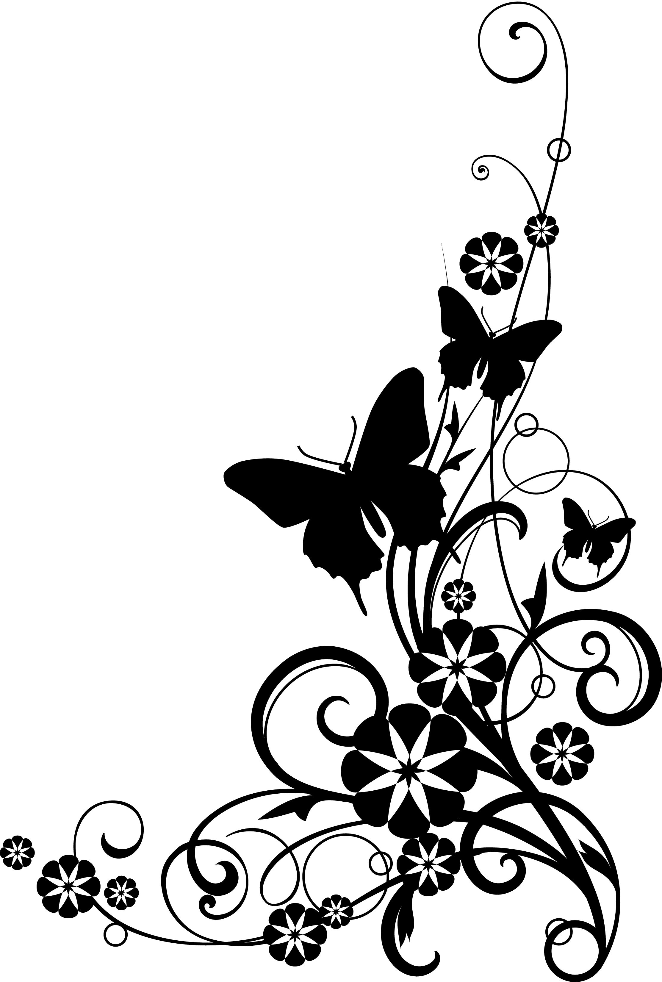 graphic Clipart borders. Wildflower sketch black and