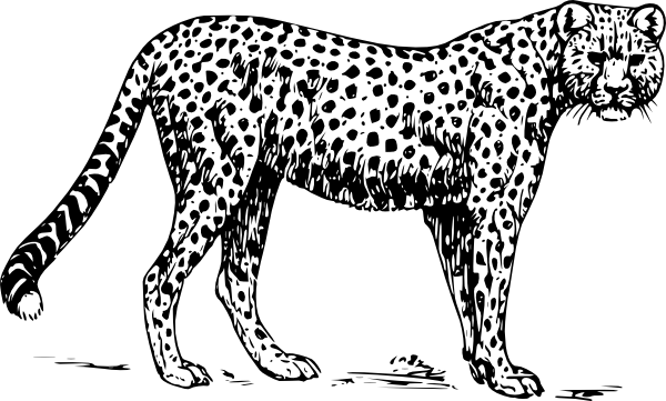 banner royalty free Cat clip art at. Drawing cheetahs