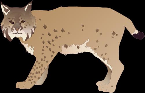 clip transparent download Lynx PNG images free download