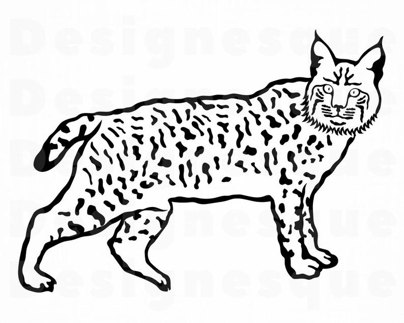 clip library Wild cat files for. Bobcat clipart svg