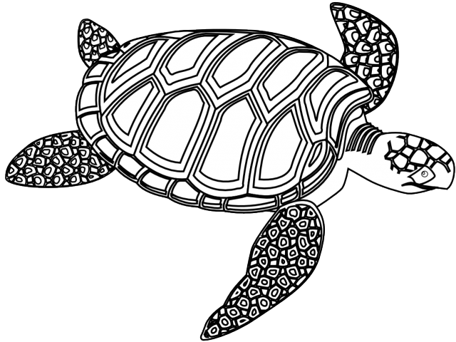 svg transparent library Sea free on dumielauxepices. Body clipart turtle