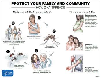 transparent stock Transmission virus cdc . Zika vector mother.