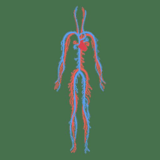 svg royalty free stock Health circulatory system blood human body