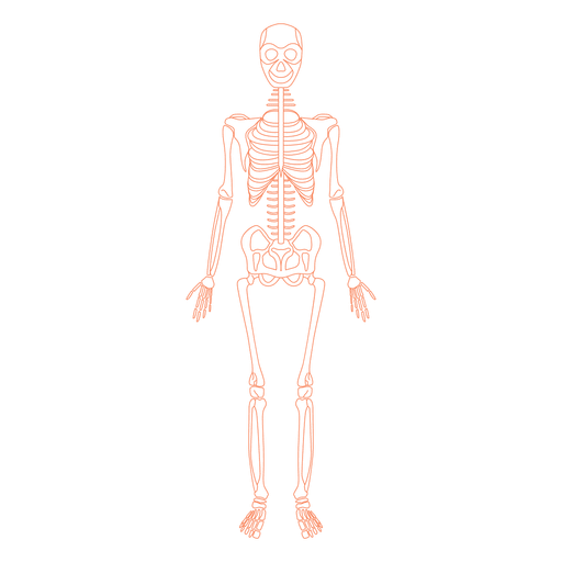 banner royalty free library Bones vector skeleton bone. Skeletal system anatomy transparent