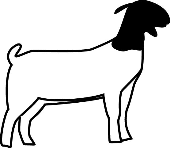 jpg library download Boer goat clipart. Club show lambs market