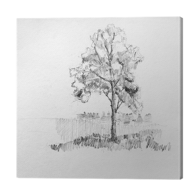 freeuse Hand drawing sketch of tree by pencil on a white paper Canvas Print