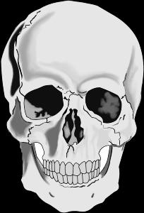 vector transparent library Human skull small image. Bone clipart realistic.