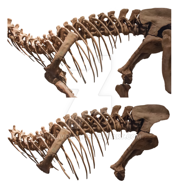 banner black and white Bone transparent animal. Dinosaur bones by evelivesey