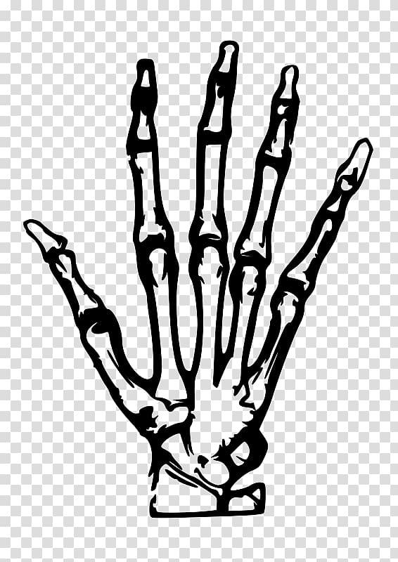 graphic free stock Human skeleton hand painted. Bone transparent simple