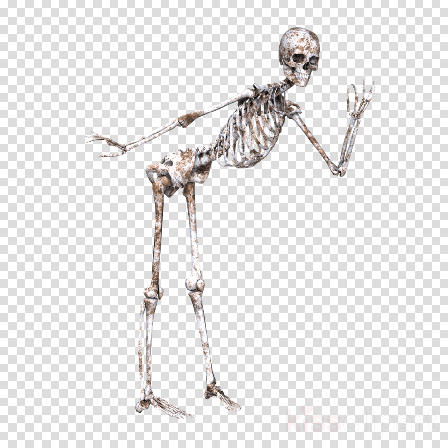 jpg library Arm fashion accessory silver. Bone transparent skeleton