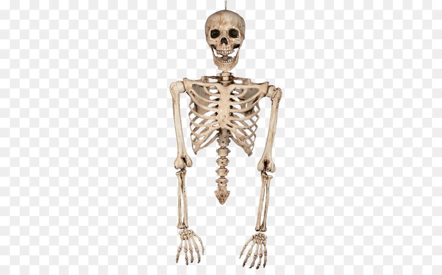 jpg black and white stock Bone transparent skeleton. Skull and bones