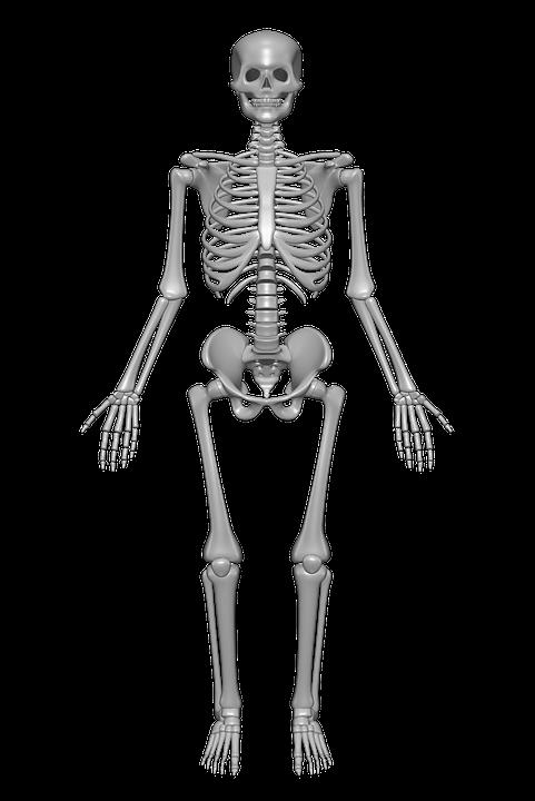 clipart freeuse library Png bones images pluspng. Bone transparent skeleton